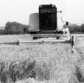 A moment of harvesting with a vintage combine.